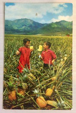 Field Ripe Pineapples Postcard Used